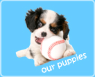 link to our puppies - nearseas